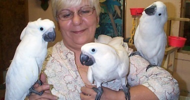tame cockatoos,baby african grey parrots,macaws,for sale, yellow naped